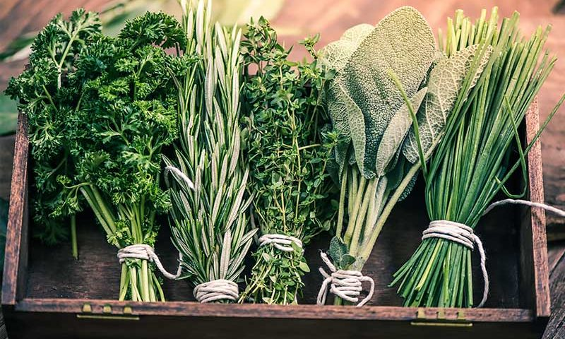 Herbs for Brain Clarity to Boost your Mental Processes   Ana Heart Blog
